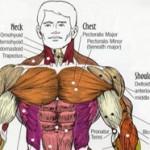Тренировка за гърди в период за маса