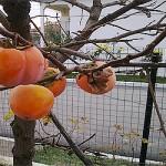 Забраненият Плод от Райската Градина