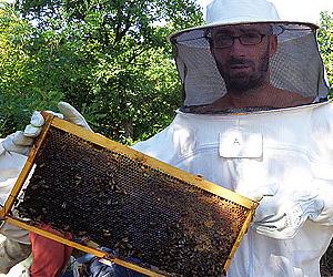 Най-добър пчелен мед