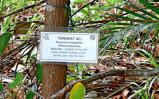 Jungle tongkatali