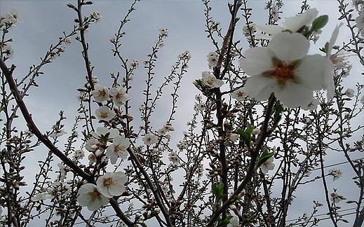 Цъфнали цветя пролет