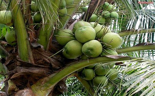 Кокосова вода от Тайланд