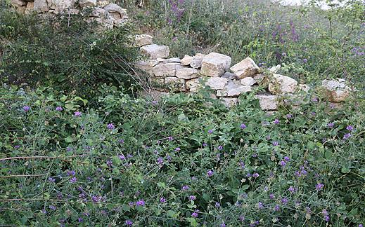 Гробница Свирачи