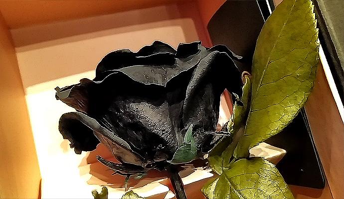 Черна роза цена